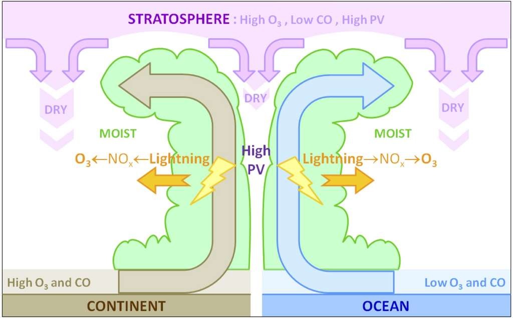 Coupe verticale idéalisée (avec une échelle verticale amplifiée) d'un typhon, ou cyclone tropical, et des transports associés d'ozone (O3) et de monoxyde de carbone (CO), en relation avec les régions sèches (dry) et humides (moist), et les zones de fort tourbillon potentiel (PV). Cette figure résume les différentes contributions à l'impact des typhons sur la composition chimique de l'atmosphère. © Franck Roux, LA-OMP