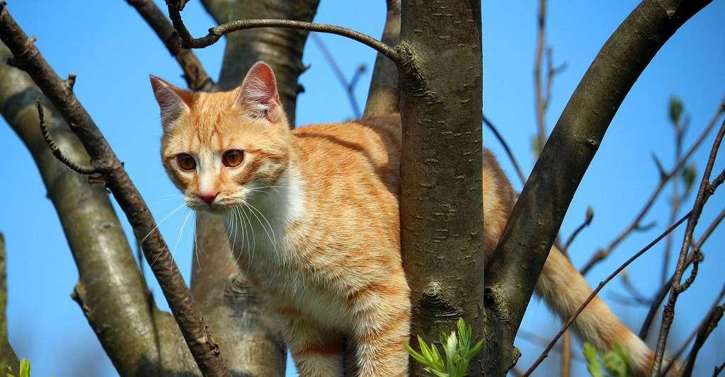 Un chat aux aguets. © Rihaij, Pixabay, DP