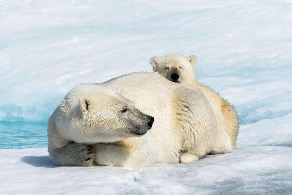 Une mère et son ourson