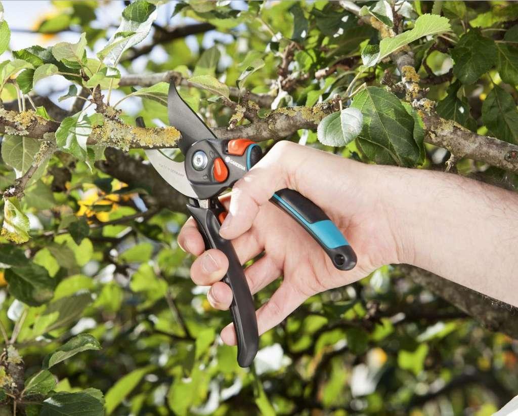 La taille des arbustes d'ornement est surtout destinée à maîtriser leur croissance. Lorsqu'ils deviennent trop imposants, leurs parties basses ont tendance à se déplumer. © Gardena