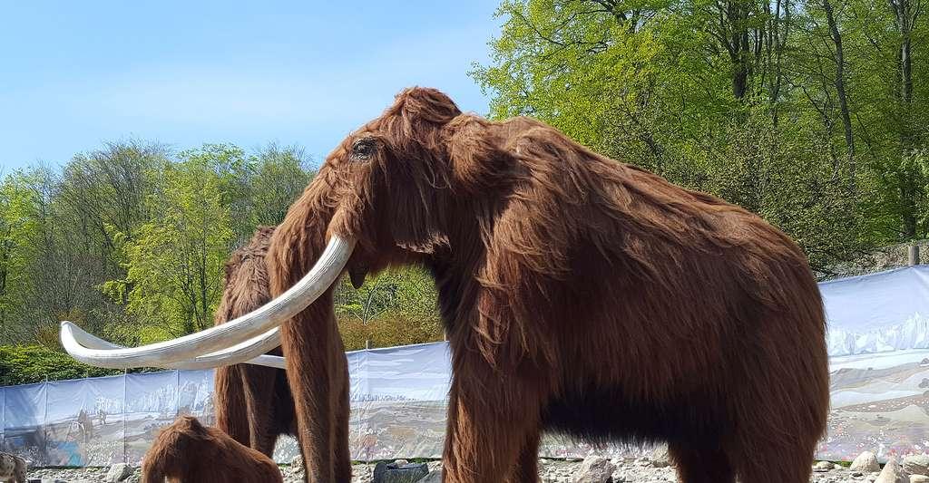 Le mammouth laineux, un animal préhistorique. © Honymand, Wikimedia Commons, CC by-sa 4.0