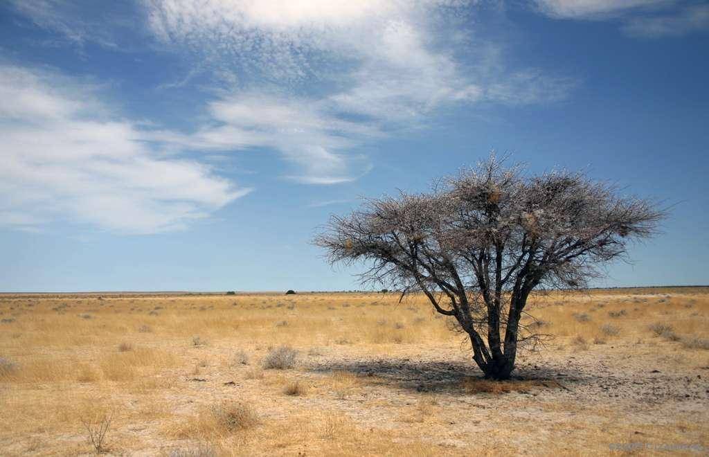 Le bush dans le parc d'Etosha, en Namibie. © Artbandito, CC by-nc 2.0