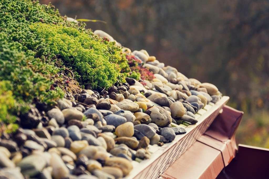 Une toiture végétalisée retient l'eau. © josefkubes, Fotolia