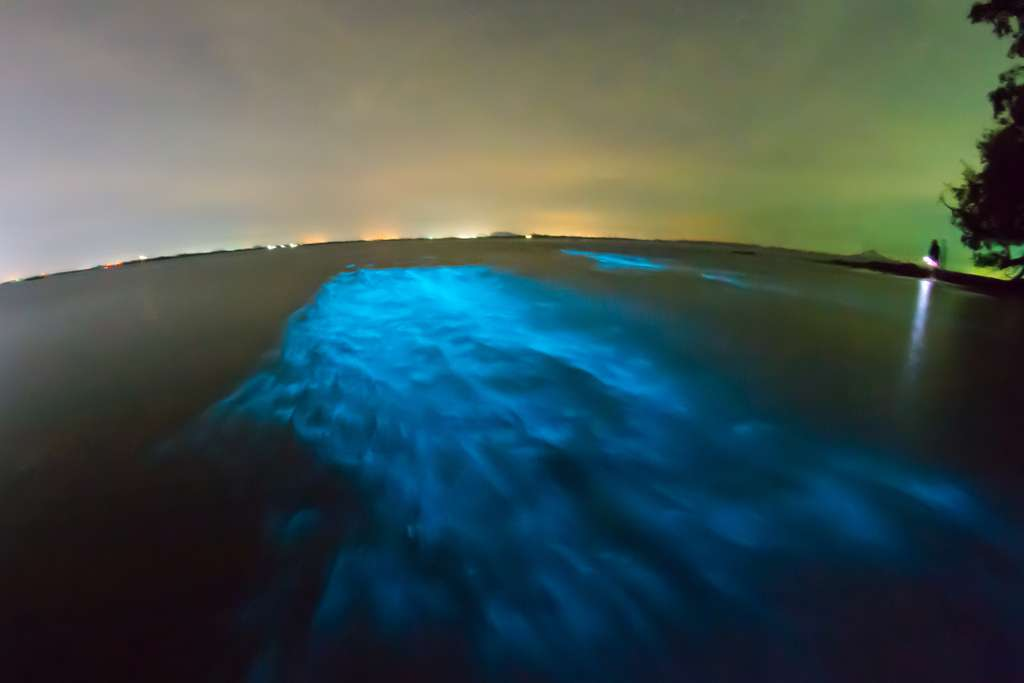 Plancton bioluminescent à Krabi, en Thaïlande. © Ilya Sviridenko, fotolia