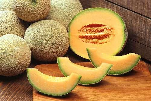 Le melon Cantaloup, le plus connu des melons de Cavaillon. © Domaine public