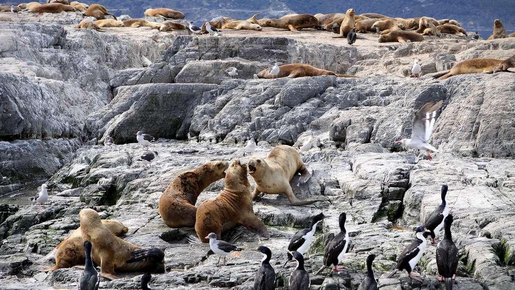 La faune sauvage du mythique canal de Beagle