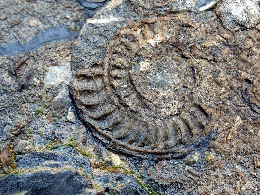 Les poissons, les tortues et les ammonites ont payé un lourd tribut durant la crise biologique du Cénomanien-Turonien. © The justified sinner, Flickr, cc by nc sa 2.0