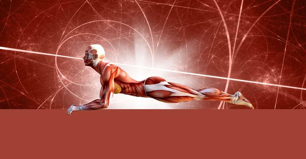Homme et bipédie : colonne vertébrale et bassin. Ici, position allongée de la colonne vertébrale. © Photosvac, Fotolia