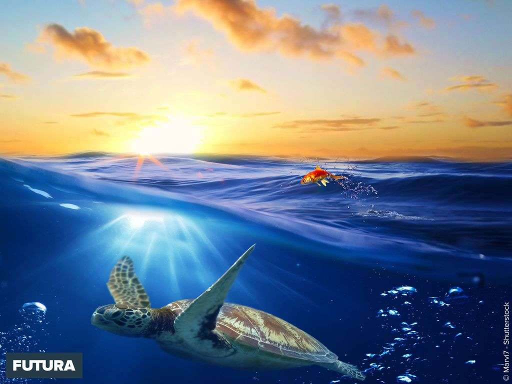 Tortue en plongée sous marine