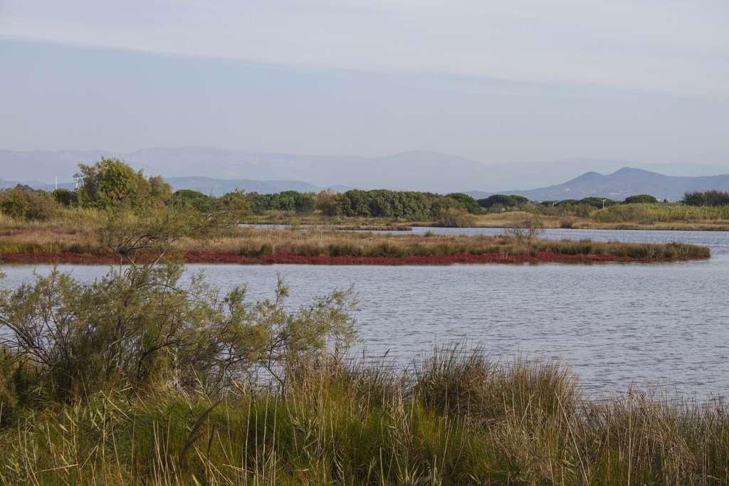 Les étangs de Villepey regroupent divers milieux. Outre les étangs, s'y trouvent aussi une lagune, des prairies, des sansouires, des dunes, des vasières, etc. © Gabriel Bianchi