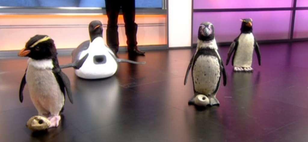 John Downer a présenté quelques-uns des robots-caméras qui lui ont permis de réaliser le documentaire Waddle All the Way. De gauche à droite, un gorfou (équipé d'une caméra dans l'œil, et d'un œuf-caméra), un manchot empereur glissant sur le ventre, un manchot de Humboldt avec un œuf-caméra et un gorfou articulé capable de se redresser s'il tombe. © Capture d'écran, BBC