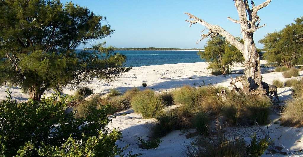 Paysage de dunes littorales du nord de l'île Europa. © B. Navez - Domaine public