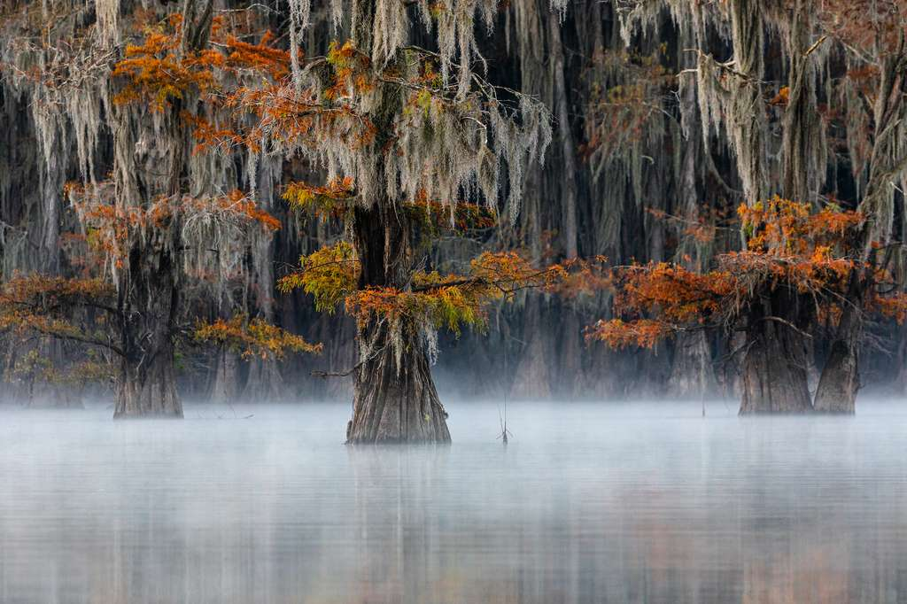 Cyprès chauve, Texas, États-Unis © Doron Talmi, World Nature Photography Awards