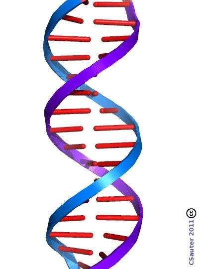 La molécule d'ADN. © Claude Sauter