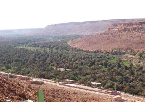 Palmeraie de l'oasis d'Aoufous, au pied de la hamada calcaire de Meski-Ghéris, au Maroc (avril 2005). La densité du couvert végétal est donnée par la strate de palmiers au-dessus d'arbres fruitiers et maraîchages