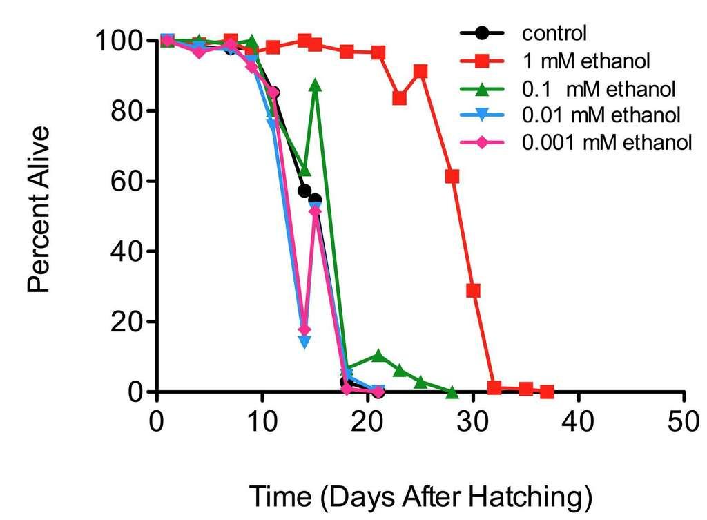 Ce graphique représente le pourcentage de vers vivants (Percent alive) en fonction du nombre de jours après l'éclosion (Days after hatching). Pour des faibles doses d'alcool (en rouge), la durée de vie des vers est prolongée. Lorsqu'on abaisse trop les doses, l'effet bénéfique disparaît et la mortalité se superpose presque avec la courbe contrôle, qu'on aperçoit à peine (en noir). © Castro et al., Plos One