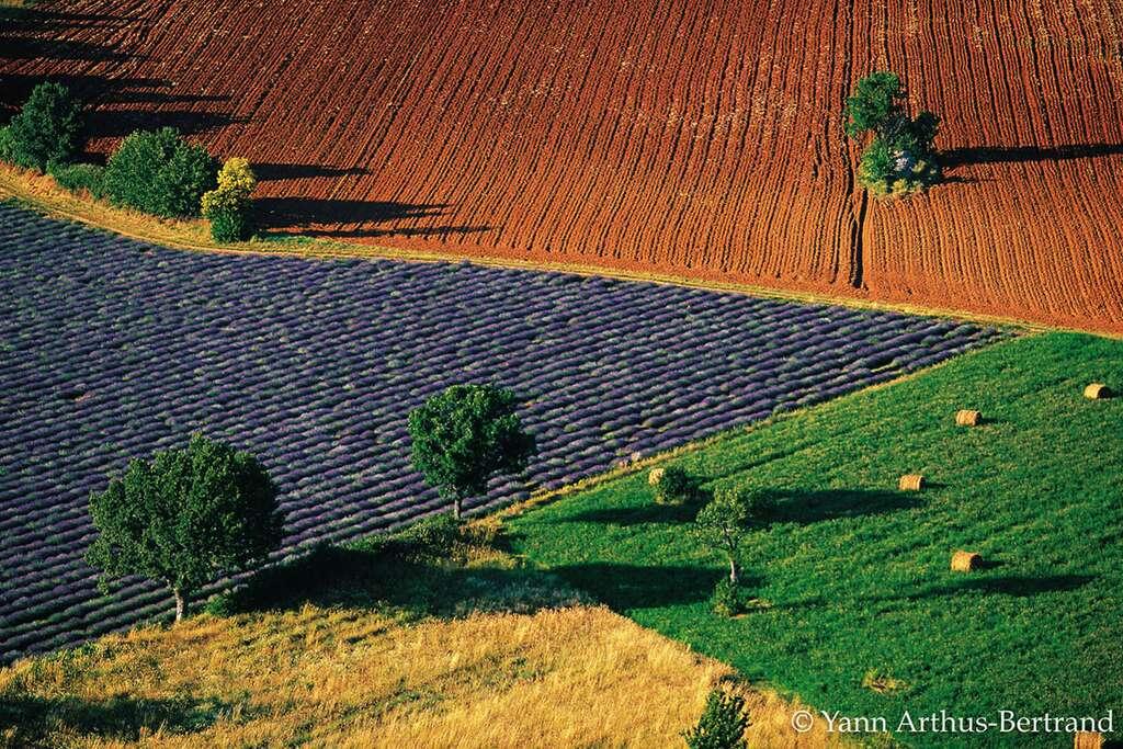 Paysage de champs colorés près de Sarraud, Vaucluse, Provence-Alpes-Côte d'Azur. © Yann Arthus Bertrand, tous droits réservés