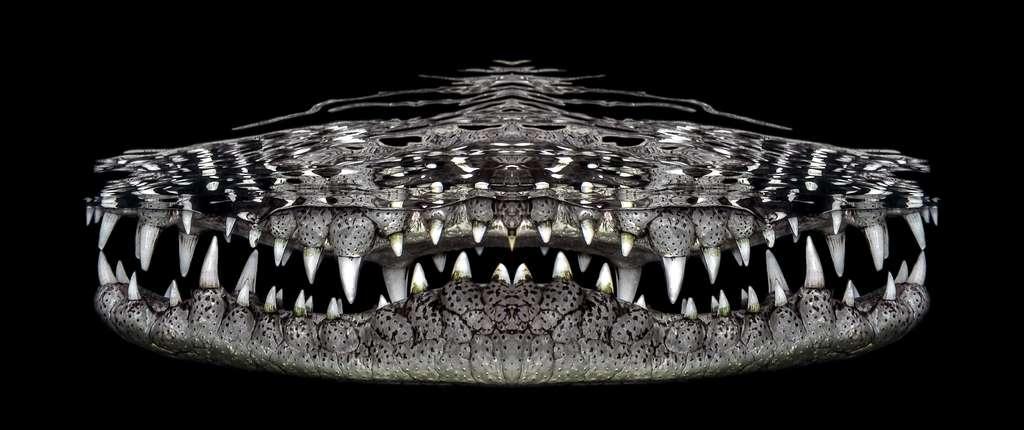 Sourire de croco. © Jenny Stock, UWPG