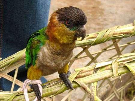 La préservation de la forêt tropicale est essentielle pour l'homme