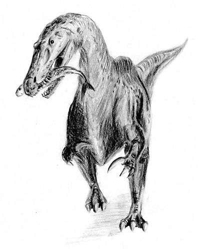 Suchomimus tenerensis, un dinosaure carnivore découvert en Afrique en 1997 par Paul Sereno. Crédit : Arthur Weasley, université de Chicago