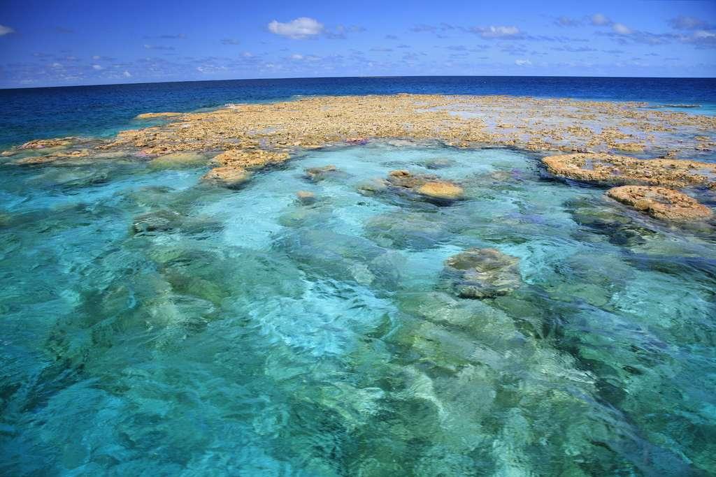 Récif de corail patate à Makemo