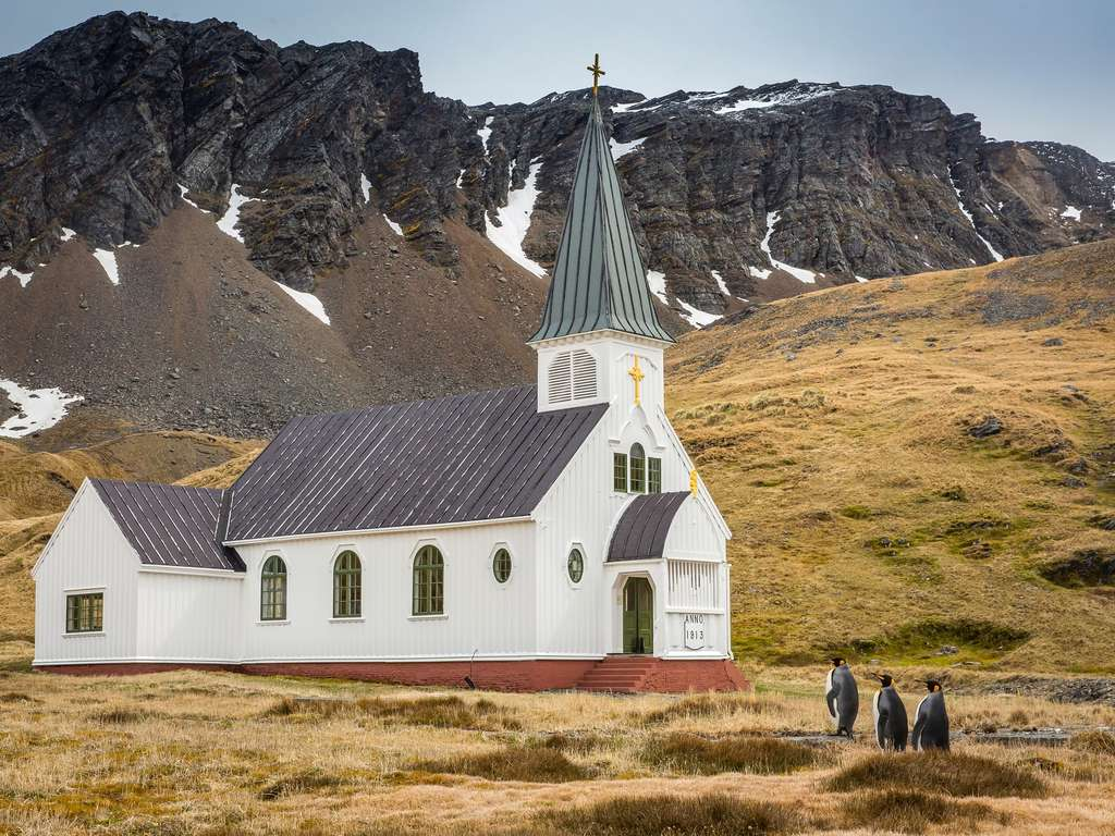 Trois manchots en route pour l'église de Grytviken. © Carl Henry, Comedy Wildlife Photography Awards