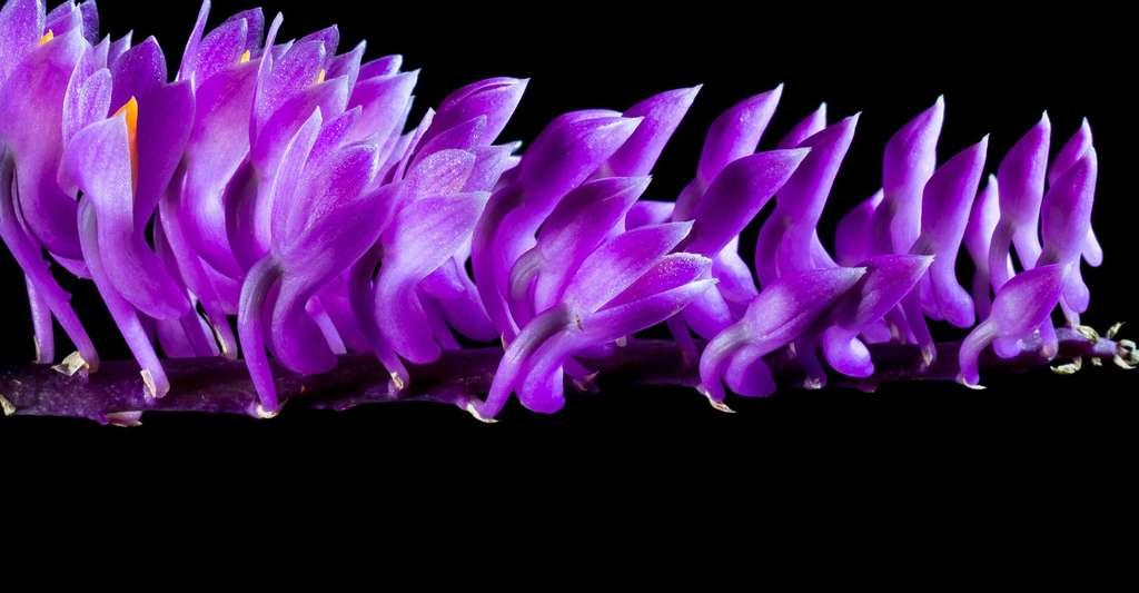 Le secret des orchidées. © Josch13, Domaine public