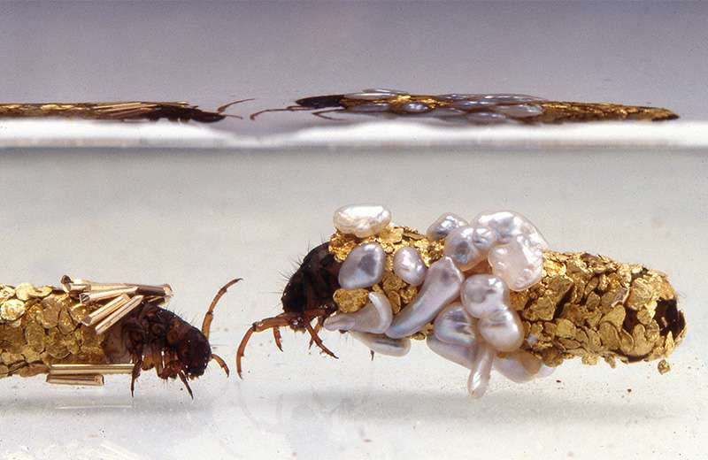 Placées dans le milieu opulent créé par Hubert Duprat, les phryganes se transforment en minuscules orfèvres. © Fabrice Gousset