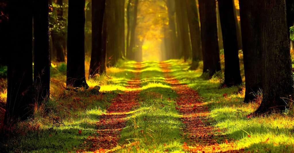 Sentier dans la forêt. © Ersi - Domaine public