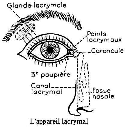 Appareil lacrymal Reproduction et utilisation interdites