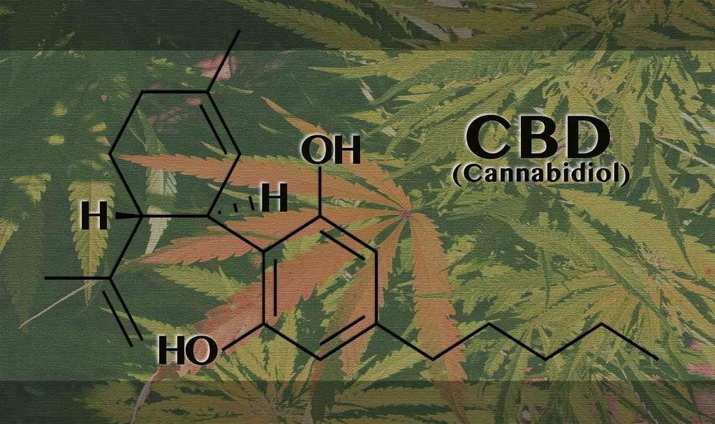 Contrairement au THC, le cannabidiol n'a pas d'effet psychoactif car il n'agit pas sur les mêmes récepteurs du cerveau. © Nida