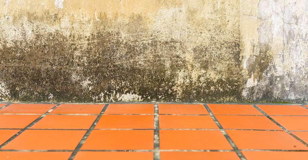 Quels sont les signes de remontées capillaires ? Ici, une trace d'humidité le long d'un mur. © Yotrakbutda, Fotolia