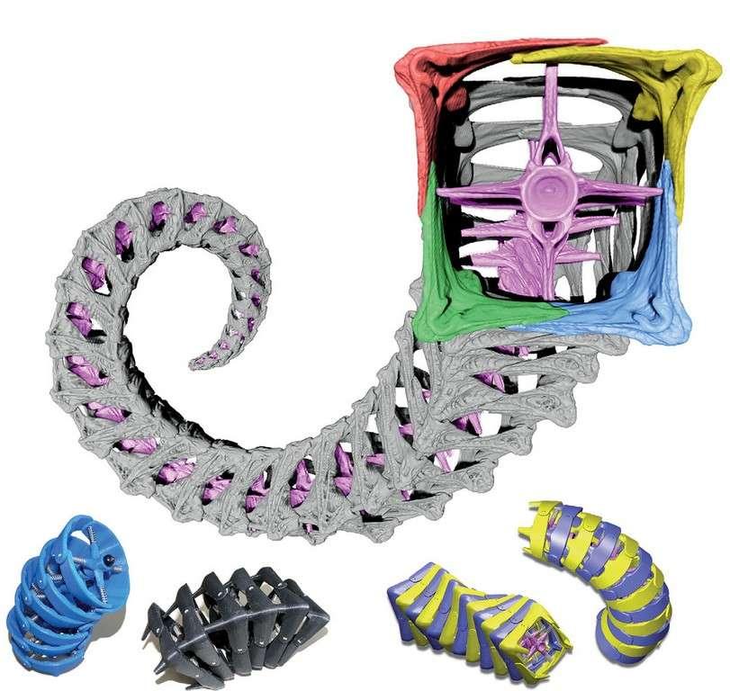 L'image principale montre la numérisation en 3D d'une queue d'hippocampe. On distingue les plaques osseuses carrées pourvues chacune de quatre sections en « L » qui se chevauchent lorsqu'une pression externe s'exerce. Les quatre images du bas sont des prototypes de queues cylindriques et carrées fabriqués avec une imprimante 3D. Les chercheurs ont comparé les propriétés mécaniques de ces deux structures et découvert les avantages du modèle imitant l'appendice de l'hippocampe. © Oregon state university