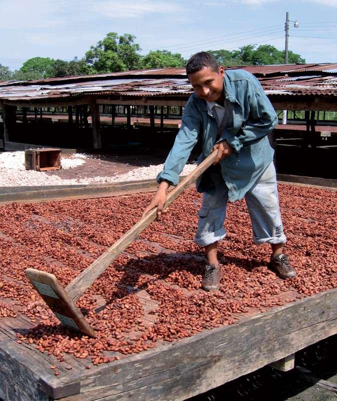 Brassage du cacao au cours du séchage. © Valrhona