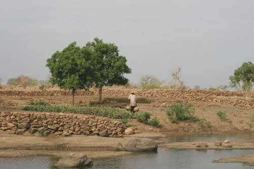 Aménagement des espaces naturels dans le pays Dogon (Bandiagara, Mali - 2003) © Photo Philippe Birnbaum - Tous droits de reproduction réservés
