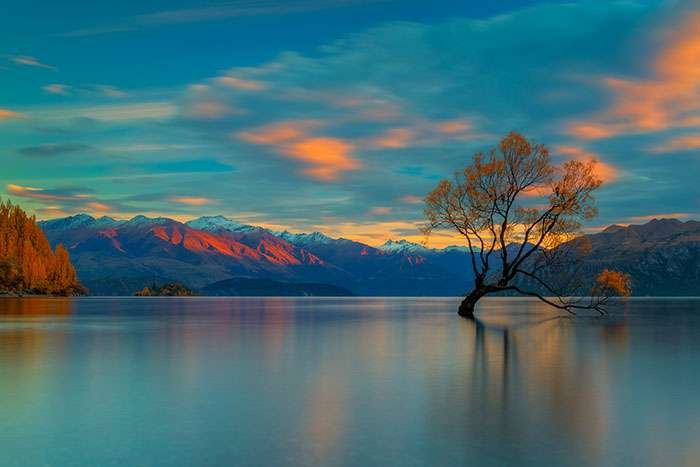 Le célèbre Wanaka Tree sur l'île du Sud en Nouvelle-Zélande. © Marcio Cabral