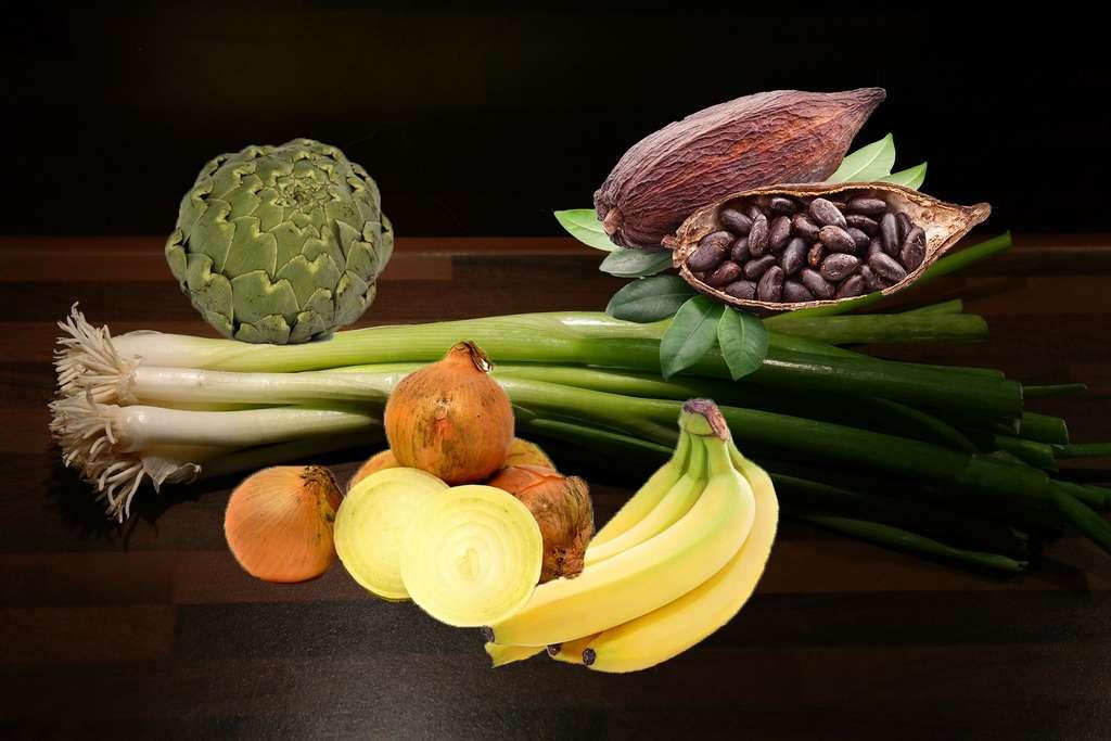 Les prébiotiques, des aliments entretiennent la flore bactérienne