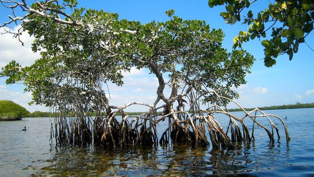 Le parc national de Biscayne et sa mangrove