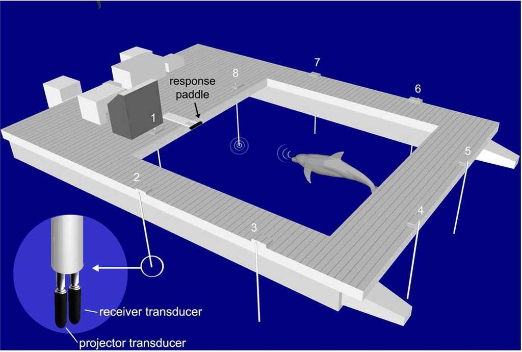 Dispositif expérimental utilisé pour tester la vigilance des dauphins au cours du temps. Huit paires de transducteurs, composées d'un récepteur (receiver transducer) et d'un émetteur (projector transducer), sont placées autour de l'enclos. Les animaux devaient signaler, en touchant ou non la palette (response paddle), s'ils avaient détecté une cible fantôme. © Branstetter et al. 2012, Plos One