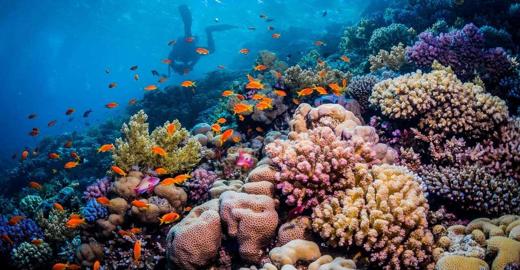Fonds marins. © Adam Ke, Shutterstock
