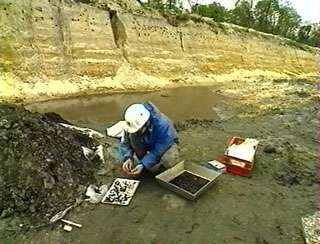 Travail de recherches sur le terrain du paléontologue