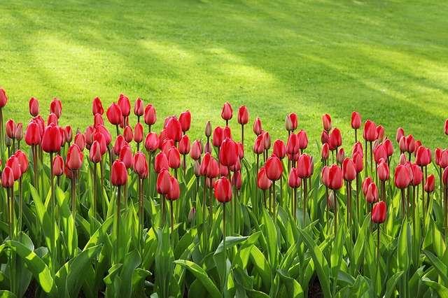 Quels soins apporter à sa pelouse ? PublicDomainPictures, Pixabay, DP