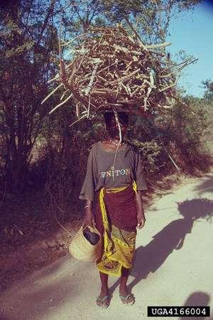 Les populations qui vivent des forêts ont leur rôle à jouer dans la préservation de celles-ci. La création de forêts « réserve de carbone » pourrait en faire des réfugiés. © James Denny Ward / USDA Forest Service CC by