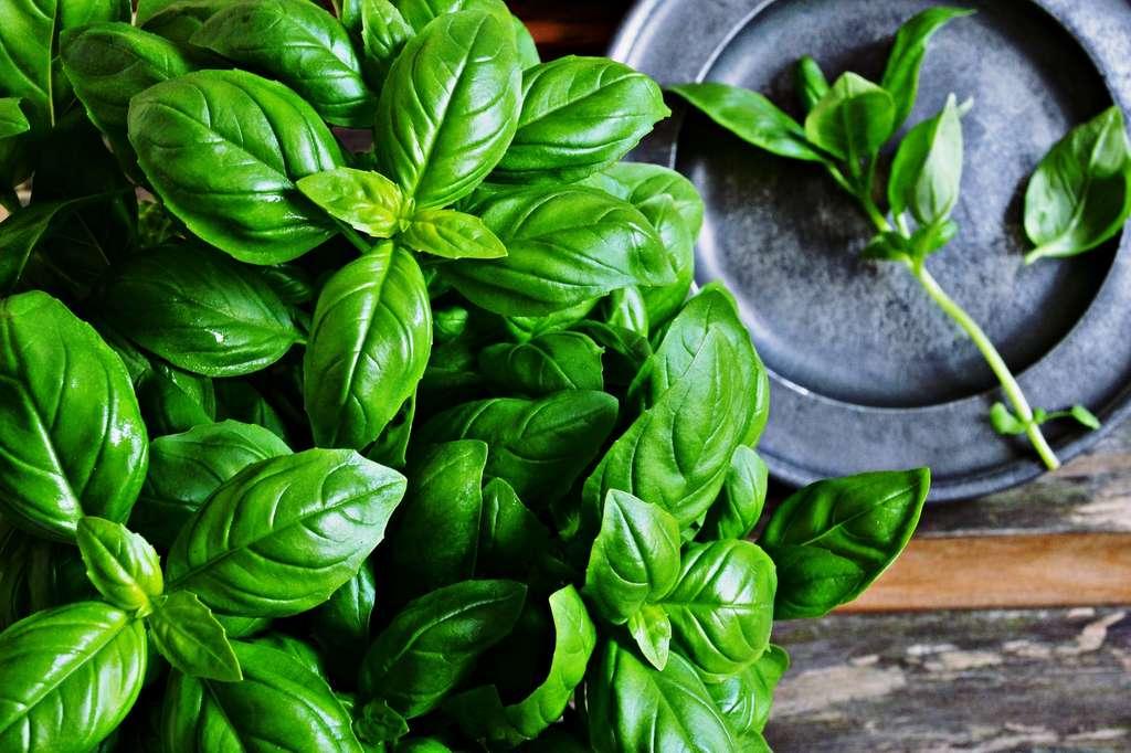 Definition |  Basil - Royal herb - Large basil |  Futura Planet