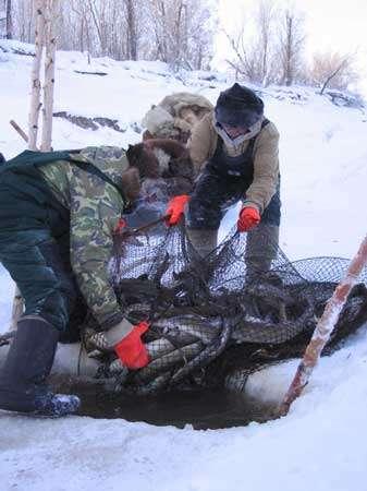 Les pêcheurs sortent des poisons de plus en plus petit, à cause du réchaufement des températures de saison © Marie Rouvillois - Reproduction ou utilisation interdites.