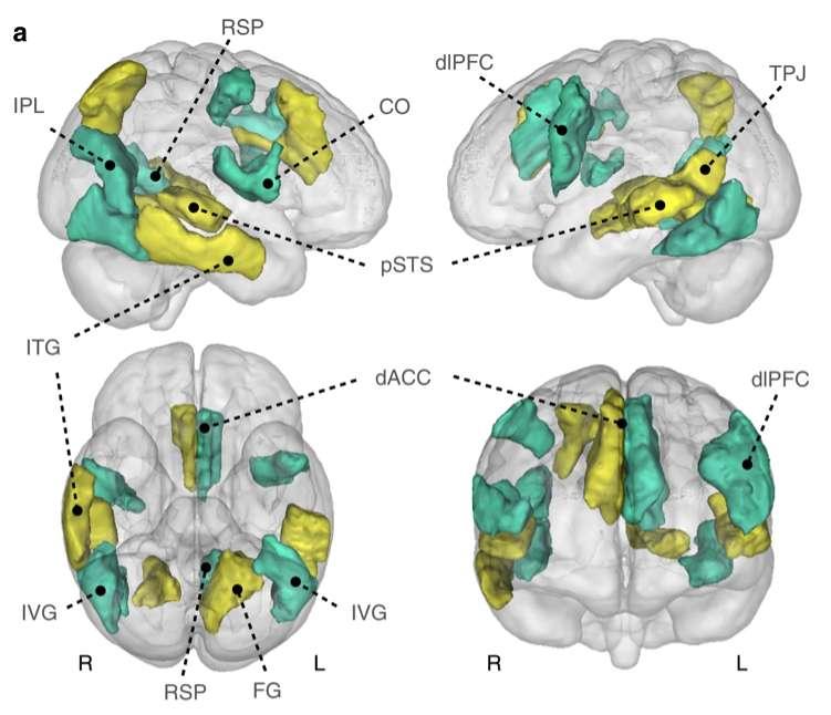 Le « réseau cérébral par défaut » s'active quand on laisse libre cours à ses pensées. © Nathan Spreng et al., Nature Communications, 2020