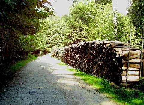 Qu'en est-il de l'exploitation des forêt ? © Ben2, GNU FDL 1.2
