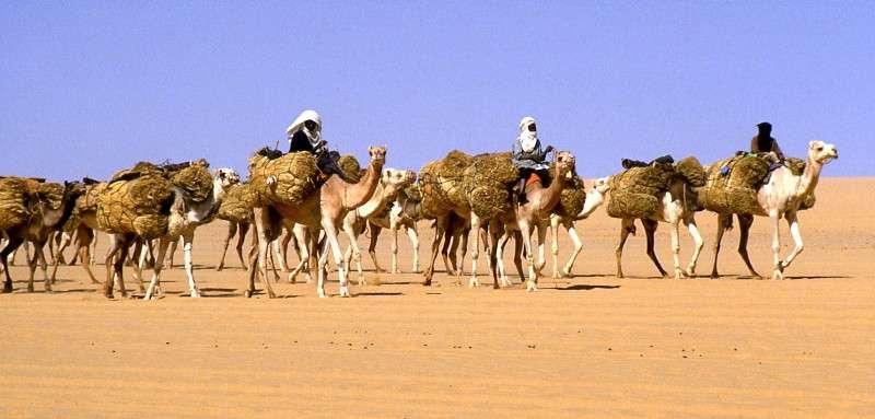 Taghlamt ralliant Agadez au départ de Bilma. © Holger Reineccius, Wikipédia, GNU 1.2