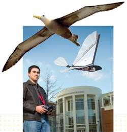 Jared Grauer testant un engin à ailes battantes directement inspiré de l'albatros, un oiseau capable de planer sur des milliers de kilomètres et qui intéresse les roboticiens. © AVL