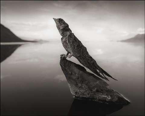 Hirondelle momifiée du lac Natron. © Nick Brandt